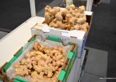 Fresh Chinese ginger. To the left is Yunnan ginger, recogisable by its smaller size and stronger taste. To the right are larger ginger roots from Shandong province. // 新鲜中国生姜。左边是云南姜,以其小规格和偏重的品味闻名。右边是来自山东省的较大的生姜根。