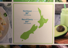 The Bay of Plent in New Zealand is where almost 65% of the country's avocado crop originates from. // 新西兰全国近65%的鳄梨作物起源于The Bay of Plenty。