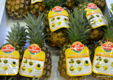 佳农的进口菠萝精选。 // Selection of Goodfarmer's import pineapples.