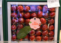Early cherries from China's in special gift packaging. // 以特殊礼品包装的中国早熟樱桃。